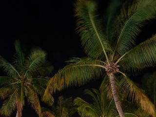Coconut Palm Inn 4