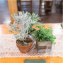 Pooh Corner Farm Greenhouses & Florist 10