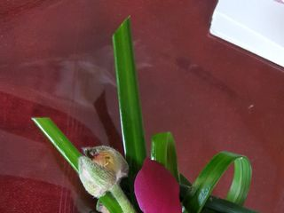 Paragon Flowers 1