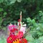 Aureate Florals 7