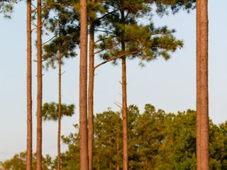 Magnolia Green Golf Club 5