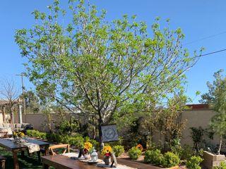 Bloomingbelles Rentals 1