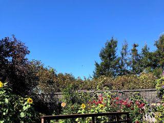 Sova Gardens 3