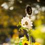 NINFA'S FLOWERS 16