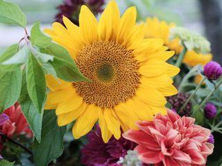 Sweethaven Farm & Flowers 6
