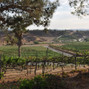 Falkner Winery 32