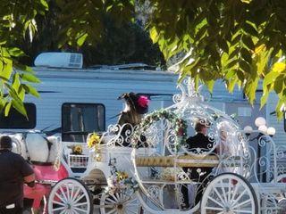 Cindy Cinderella Carriages 5