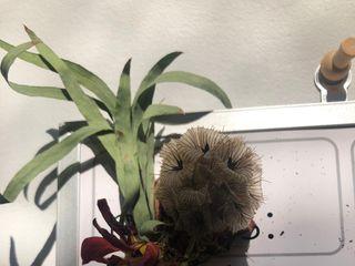 Babbidge Bouquets 2