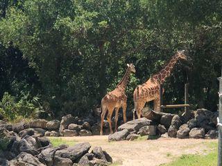 Nyami Nyami River Lodge at The Brevard Zoo 3