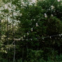 Coastal Maine Canopies 17