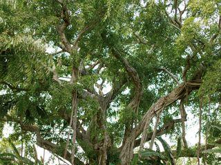 Miami Beach Botanical Garden 5