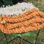 Sanddollars Floral 6