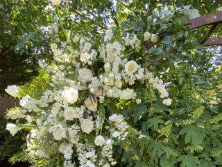 MaryAnn Blooms 3