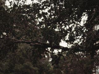 Flightless Bird Photography 5