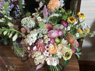 Viavi Flower Farm 1