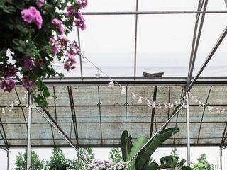 Buchwalter Greenhouse 2