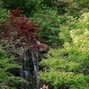 Anderson Japanese Gardens 8