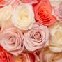 Bucks County Roses Weddings by Pat 18