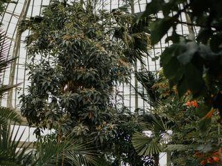 The Botanical Gardens 1