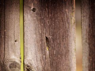 Deanna Schuller Photography & Creative 1
