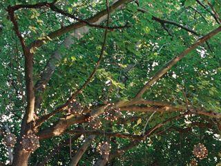 Brownstone Gardens 5