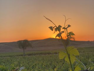 Chapin Family Vineyards 4