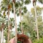 Boojum Tree 23