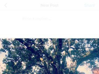 Live Oak Plantation 2