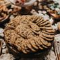 Ambrosia Cakes 12