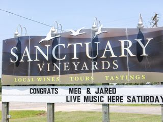 Sanctuary Vineyards 2