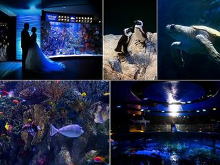 New England Aquarium 1