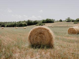 Titignano Agricola 2