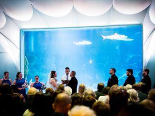 Newport Aquarium 1