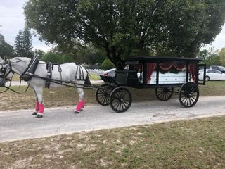 Sweet Southern Horse & Carriage 1