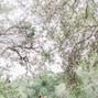 Scenic Springs 8