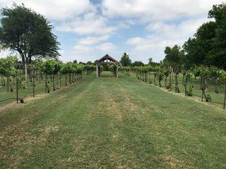Nellis Vineyards 1