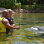 Discovery Cove - SeaWorld Parks & Entertainment 13