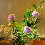 Belak Flowers 12