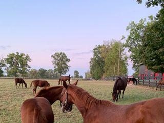 Hermitage Farm 5