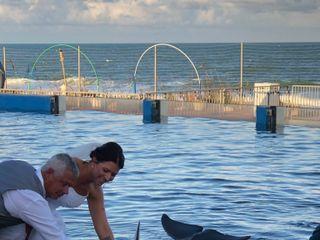 Marineland Dolphin Adventure 2