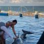 Marineland Dolphin Adventure 7