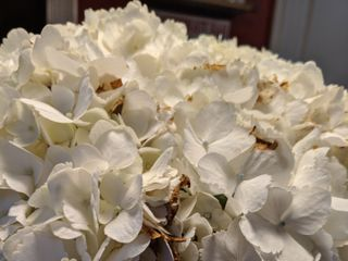 Wholesale Online Flowers by Gallon E&I 4