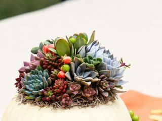 Succulents for Hire 7