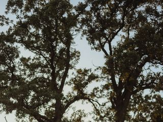 White Oak Savanna 1
