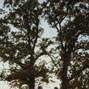 White Oak Savanna 6