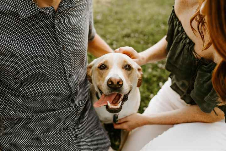 Dogs in engagement photos - 3