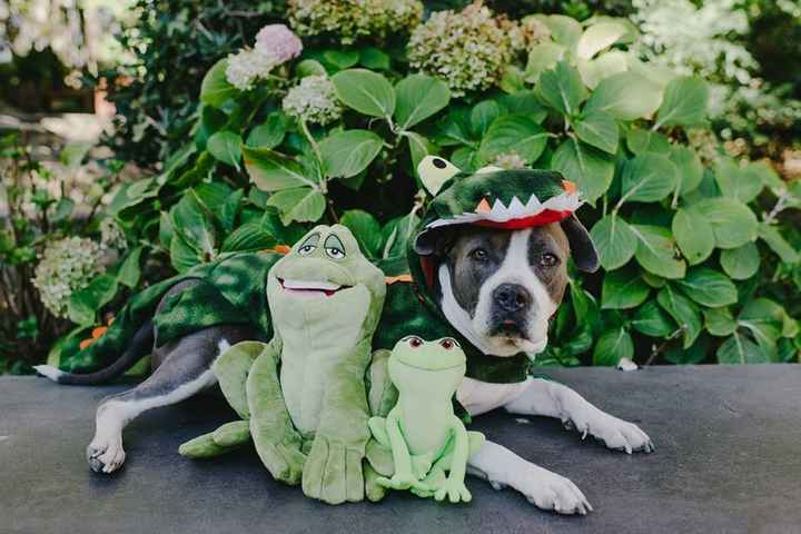 However a mysterious gator dog sees them and tells them she can turn them human again! ...
