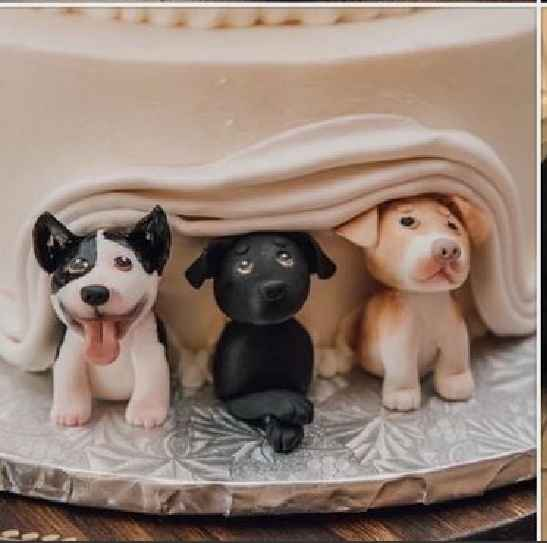 Are You Including Your Pets In Your Wedding? 🐶🐱 - 2