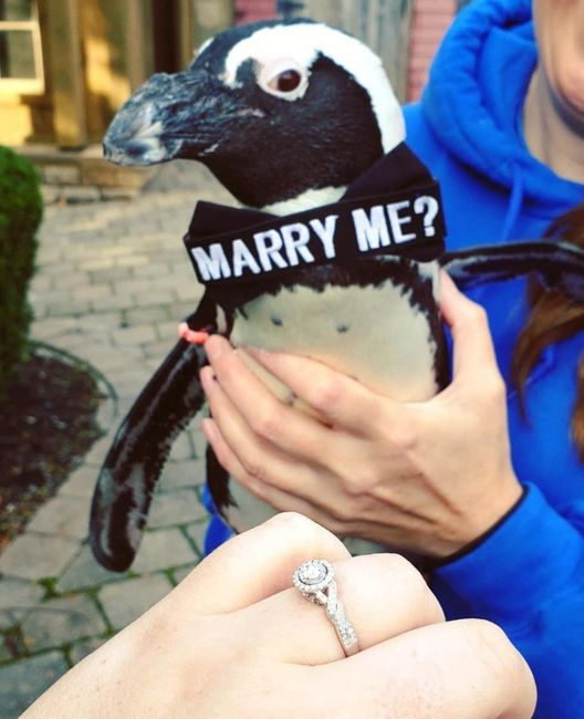 Share your proposal story! 9