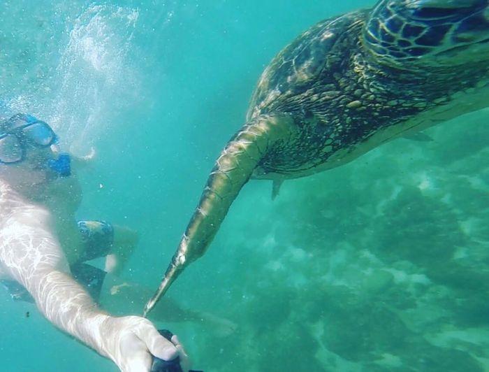 Best Island in Hawaii for Honeymoon? 3